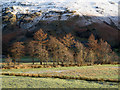 NY3915 : Rough grazing in Patterdale : Week 3