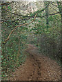 SS8677 : Woodland footpath, Candleston (2) by eswales