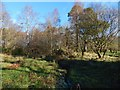 NS4276 : Burn flowing through woodland by Lairich Rig