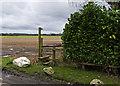 SJ6883 : Footpath off Moss Lane to Sink Moss by Ian Greig