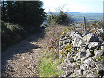 S6538 : Country Lane by kevin higgins