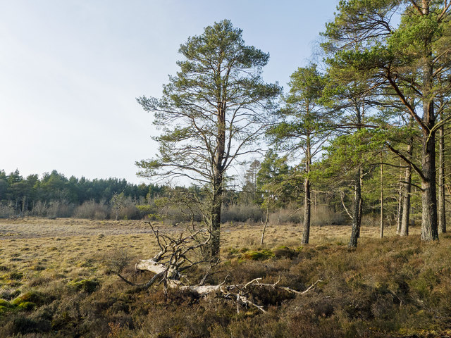 Area of bog within the Monadh Mor bog forest