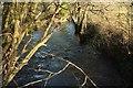 ST7356 : Wellow Brook by Derek Harper