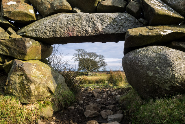 Through the lunky hole