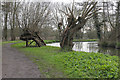 TQ0051 : Willows, River Wey Navigation by Alan Hunt