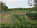 TL4364 : Allotments by Cottenham Road, Histon by Hugh Venables
