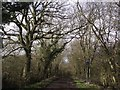 SP8130 : National Cycle Route 51, the Midshires Way and the Swan's Way follow this by-way by Tim Glover