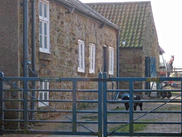 Heath - farmyard at Ivy Farm