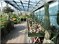 TQ5074 : Cacti in the greenhouse at Hall Place by Marathon