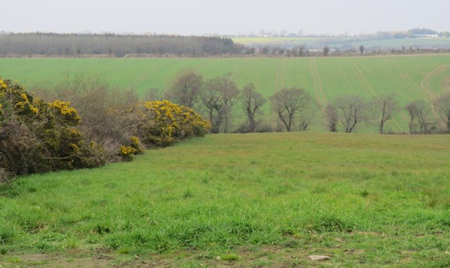 Fields and woodland west of Carrigaline