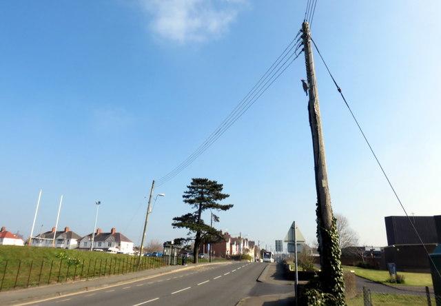 Woodpecker decoy in Aberystwyth Road