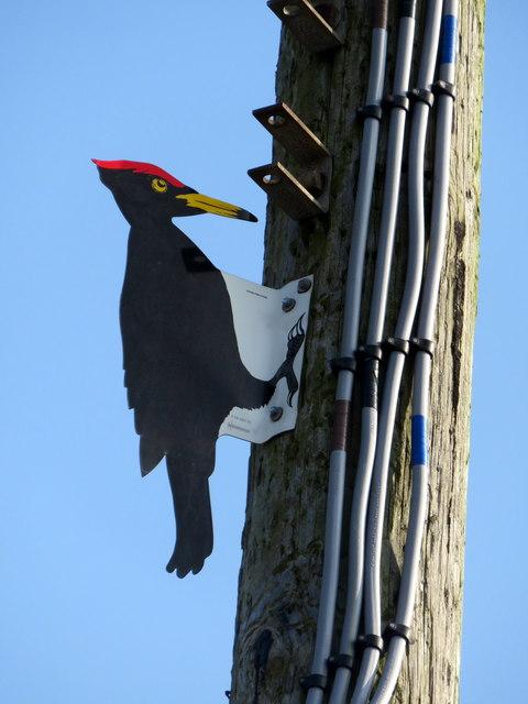 Woodpecker decoy in Aberystwyth Road, detail