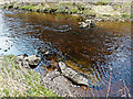 NH7342 : Stepping Stones River Nairn by valenta