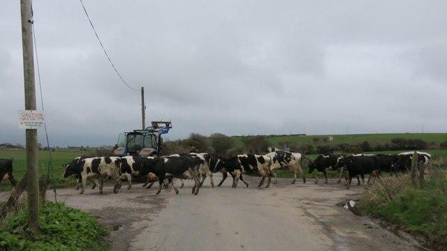 Traffic jam in rural Ireland