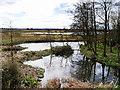 SD4214 : Wetlands at Martin Mere by David Dixon