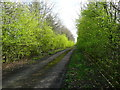 SJ5463 : Moss Lane, Tarporley by Humphrey Bolton