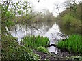 NZ1564 : Curling Pond, Ryton Willows by Andrew Curtis
