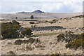 SX6475 : View towards Longaford Tor : Week 15