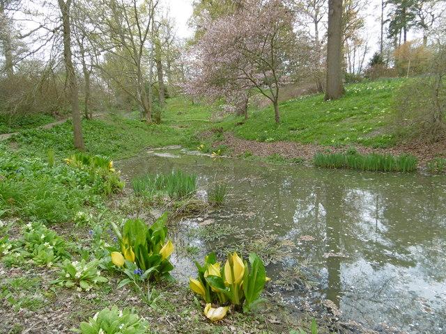 A pond at hole park gardens marathon cc by sa 2 0 for Garden pond kent