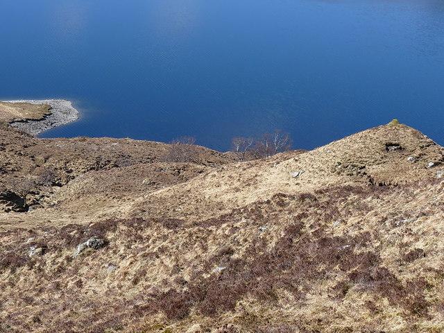 Few scattered birch trees