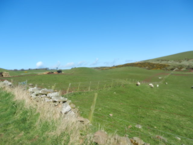 Grazing fields north of Mordington Holdings