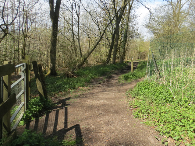 Footpaths cross on the edge of Dog Wood