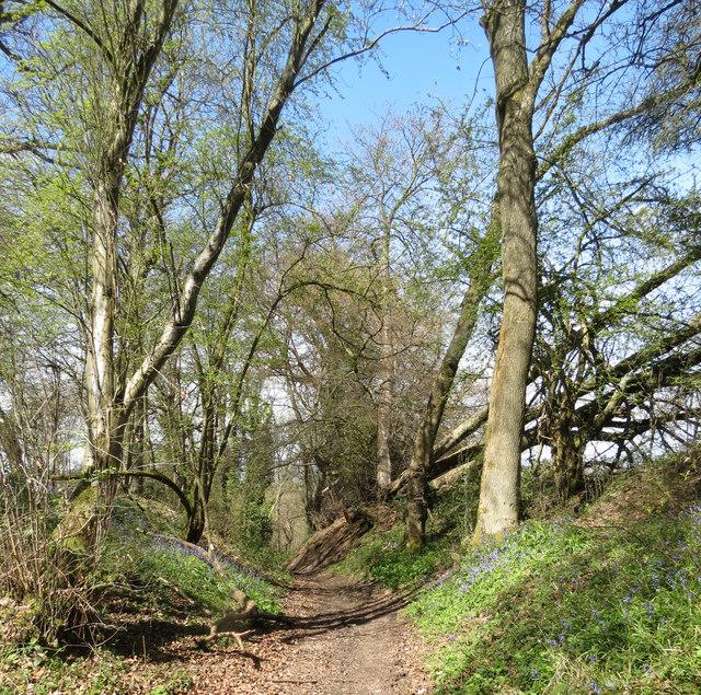 On the County Bouindary Footpath near Hastoe