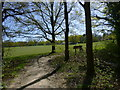 TQ4038 : Edge of football ground in Ashplats Wood by Shazz