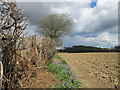 SP9003 : Ploughed field, trees and hedgerows south of Field End Grange by Peter