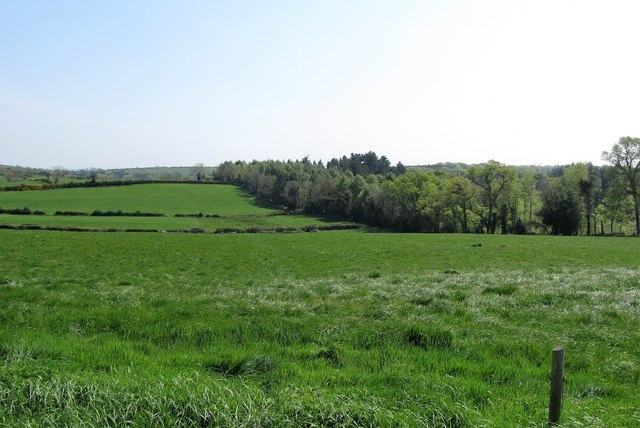 Cultivated grassland between Tannaghmore Road and the A24