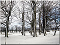 NJ8041 : West Backhill of Lethenty: Garden in Winter by Jonathan Williams