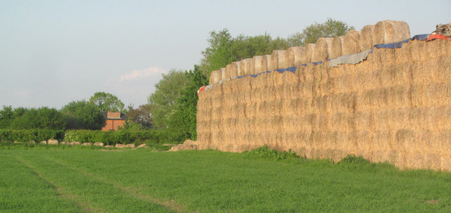 A Mountain of Straw on Alnwick Farm