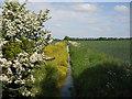 TF1507 : Drain near Northborough by Paul Bryan