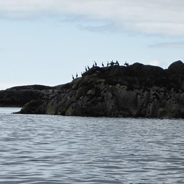Cormorants on An Dubh-sgeir a Deas