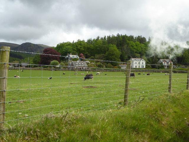Sheep graze near Irton Road Station