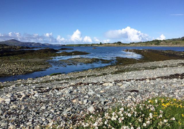 Shoreline at Farrangnanagh Lough