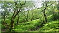 SO2831 : Shades of Green, 1 by Jonathan Billinger