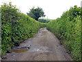 SU9794 : Bottom House Farm Lane by Robin Webster