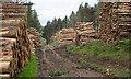 NY9349 : Timber stacks alongside estate road : Week 25