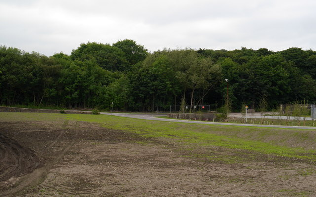 New grass, Kirkstall Forge