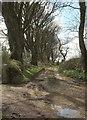 SX1662 : Track, Braddock by Derek Harper