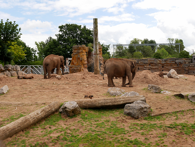 Asian Elephant  The Cincinnati Zoo amp Botanical Garden