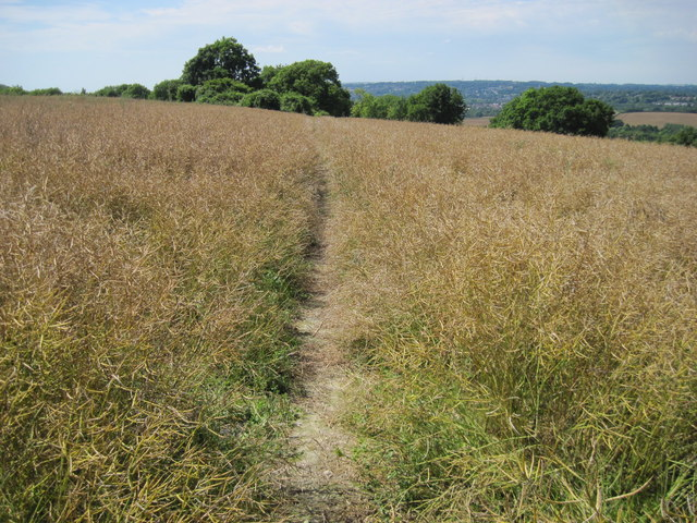 Footpath towards Chilcomb