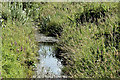 J4745 : Stream, Ballyrenan, Downpatrick (July 2016) by Albert Bridge
