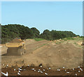 TG2614 : Seagulls on newly deposited soil : Week 29