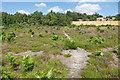 SU9053 : Lowland heath, Ash Ranges by Alan Hunt