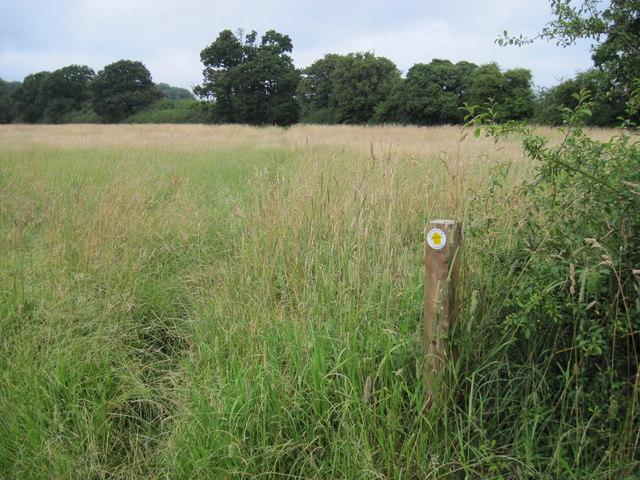 Footpath towards Chawton