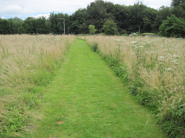 Footpath in Selborne