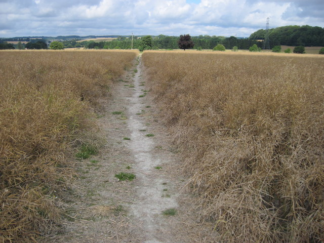 Path towards Clay's Lane