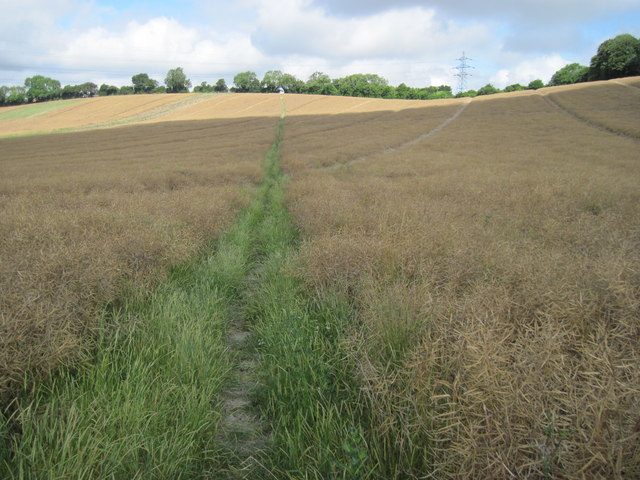 Path towards Neatham Down